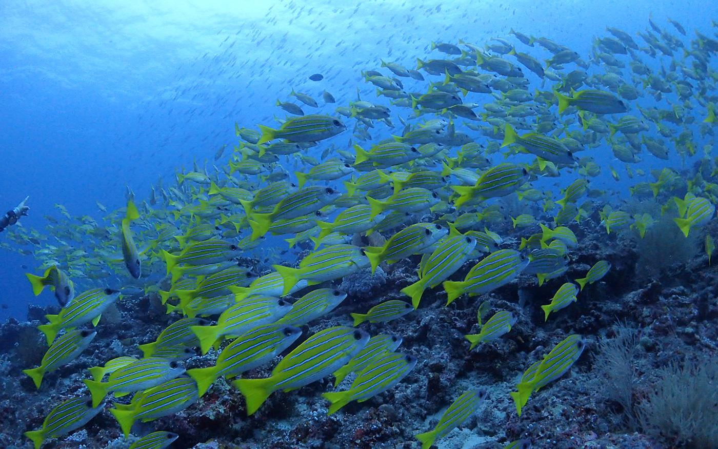 新島のダイビングポイント